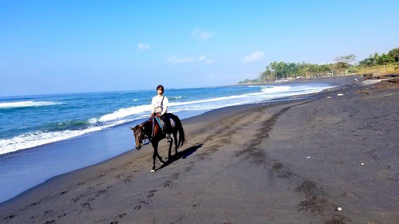 バリ島 ライディングホース 乗馬体験  走れる
